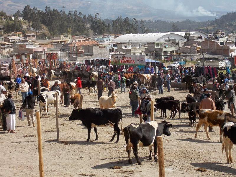 Tier Markt